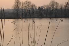 Münsauer-Teich-im-Winter-mit-Fischreihern