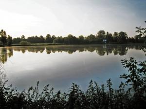 gefüllter Teich in Wilchwitz