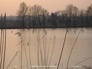 der Münsauer Teich in Wilchwitz im Winter mit Fischreihern