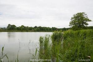 eine Foto der Idylle am Oberen Münsauer Teich in Wilchwitz