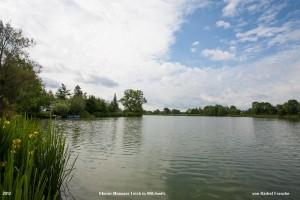 ein Foto des Oberer Münsaer Teich in Wilchwitz